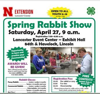 Spring Rabbit Show