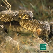 Critter Roundup: Slithering Snakes