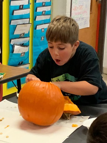 cis students explore and research pumpkins