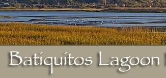 Batiquitos Lagoon Docent Led Walking Tour