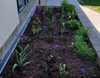 Tulips and flowers in flower bed
