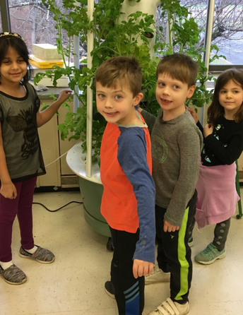 Aeroponics - An Innovative Growing System